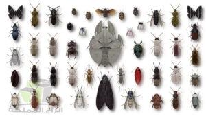 شركة مكافحه حشرات في راس الخيمة