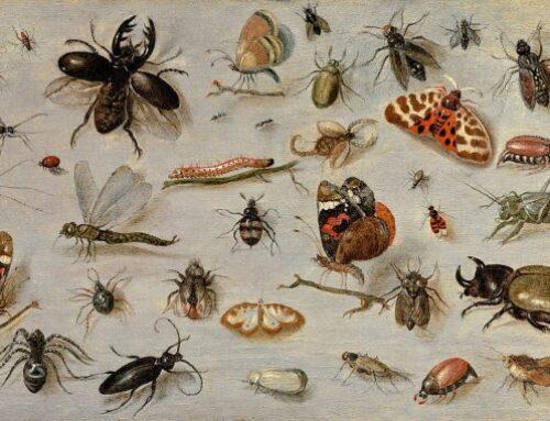 شركة مكافحة حشرات في الشارقة |0561367473|مبيدات امنة