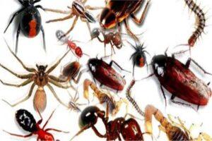 شركة مكافحه حشرات في ابوظبي